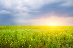 Sunset on flower meadow. Royalty Free Stock Photo