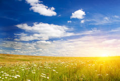Sunset on flower meadow. Stock Image