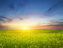Sunset on flower meadow. Stock Photo