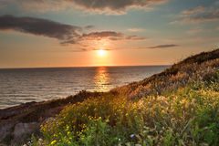 Sunset flower meadow and ocean spring colors. Sunset flower meadow and ocean during spring with vivid bright colors over Italian sea at Sardinia tourism and Royalty Free Stock Photo
