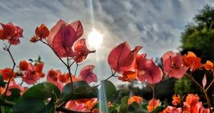Sunset flower stock image