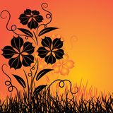 Sunset and flower, vector Royalty Free Stock Image