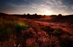 Sunset on  flowering meadows Stock Image
