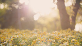 Sunset, flowers, beautiful Royalty Free Stock Photos