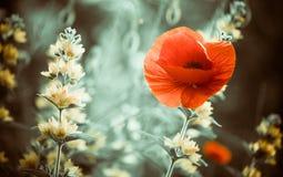 Sunset flowers Stock Photo