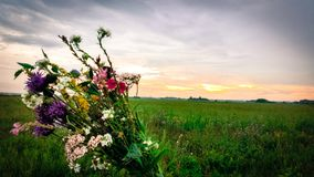 Sunset and flowers royalty free stock image