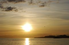 Sunset Flying. The sunset view with a flying bird in Vancouver Bay (British Columbia, Canada Stock Image