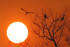 Sunset with flying bird Royalty Free Stock Image