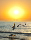 Sunset and flying birds Royalty Free Stock Images