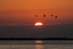 Sunset and flying birds Royalty Free Stock Photography