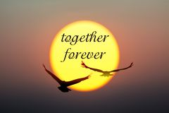Sunset and Birds with together forever text royalty free stock image