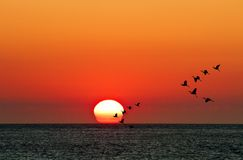 Sunset with flying sea birds Royalty Free Stock Photos