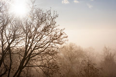 Sunset and fog in a forest in winter Royalty Free Stock Image