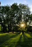 Sunset in forest. Summer forest in sunset, sunlight through the woods Royalty Free Stock Photography