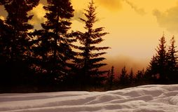 Sunset Forest royalty free stock photos