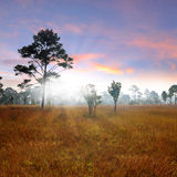 Sunset forest. Sunset in forest againt grass field stock photos