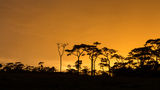 Sunset on forest. The sunset at rain forest Royalty Free Stock Photos