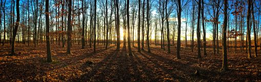 Sunset in the forest Stock Photography