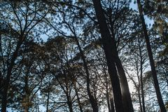 Sunset at the forest with blue sky royalty free stock photo