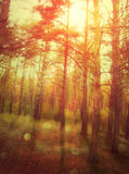 Sunset Forest Royalty Free Stock Photography