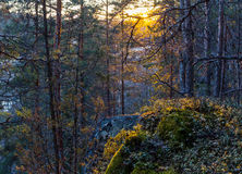 Sunset in  forest Royalty Free Stock Photography