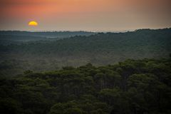 Sunset, Forest from the Dune du Pilat, the biggest sand dune in Europe, France stock photo