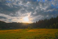 Sunset at the forest edge Stock Images