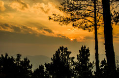 The sunset in the forest. The sunset in the forest at evening Royalty Free Stock Image