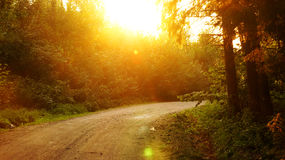 Sunset forest fairy road. The road running through the magic forest at sunset Stock Photos