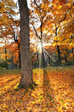 Sunset in the Forest in the Fall Royalty Free Stock Image
