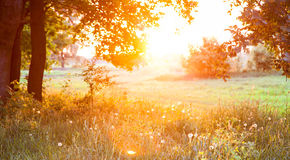 Sunset. Forest glade. The branches of the trees. Green grass. Glare royalty free stock photo