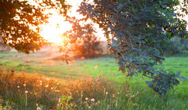 Sunset. Forest glade. Royalty Free Stock Image