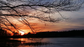Sunset on the Forest Lake stock video footage