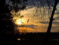 Sunset in the forest. Sunset in the middle of forest Stock Photography