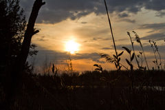Sunset in the forest. Sunset in the middle of forest Royalty Free Stock Photos