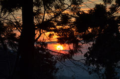 Sunset in the forest Stock Photo