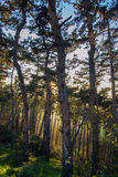 Sunset forest Royalty Free Stock Image