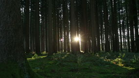 Sunset in the forest, part2. Sun goes down in an autumnal forest stock footage