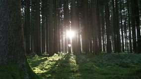 Sunset in the forest, part1. Sun goes down in an autumnal forest stock footage