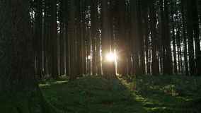 Sunset in the forest, part3. Sun goes down in an autumnal forest stock footage