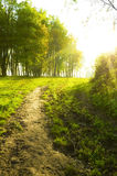 Sunset forest path. With rays of light Royalty Free Stock Image