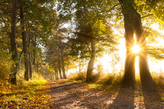 Sunset on a forest path in autumn. Scenery Stock Photo