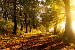 Sunset on a forest path in autumn. Scenery Stock Image