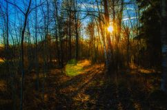 Sunset in the forest royalty free stock photo