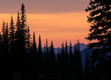 Sunset forest silhoettes Royalty Free Stock Photography