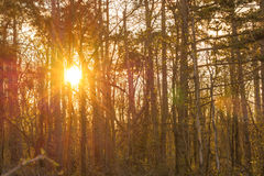 Sunset in the forest in spring Stock Images