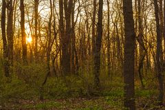 Sunset in the forest in spring Stock Photos