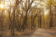 Sunset in the forest in spring Royalty Free Stock Images