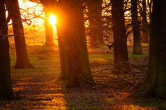 Sunset  Forest Royalty Free Stock Photo