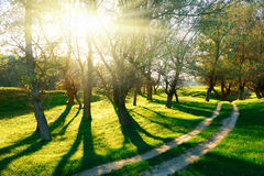 Sunset in forest, sunlight with tree shadows on glade. Ground road Royalty Free Stock Photos